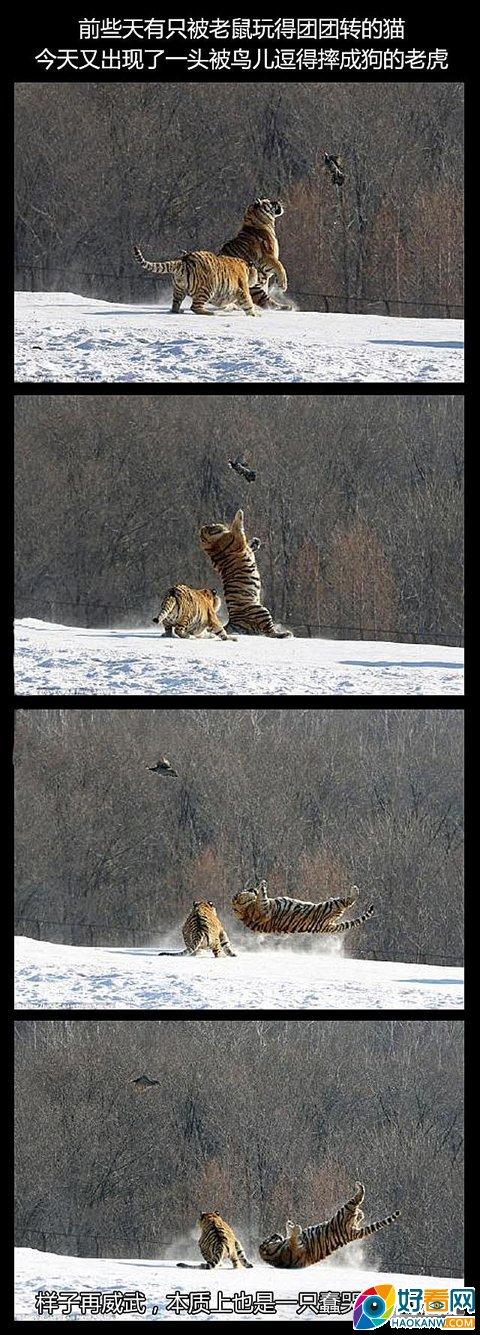 猫科动物都素深井冰